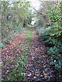 SP8526 : Coming in to Stewkley on the Circular Walk by Philip Jeffrey