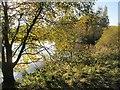 NS9591 : Pond, Brucefield by Richard Webb