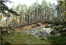 NH9817 : A Kame in Abernethy Forest by Mary and Angus Hogg