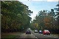 SZ0195 : Pedestrian crossing on Gravel Hill by Robin Webster