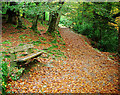 J3432 : Bench, Tollymore Forest Park by Rossographer