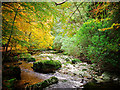 J3331 : The Shimna River, Tollymore Forest Park by Rossographer