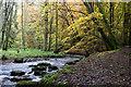 NO2248 : Alyth Burn in Den o' Alyth by Mike Pennington