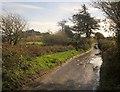 SX7379 : Lane across Swine Down by Derek Harper