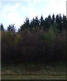 NY6565 : Greenhead Cleugh by JThomas