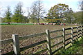SP3920 : Cattle at Ditchley Park by Graham Horn