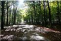 SP3821 : Dog Kennel Wood by Graham Horn