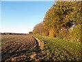 SU6099 : Autumn Hedge near Stadhampton by Des Blenkinsopp