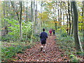 SP3822 : In Laurel Wood by Graham Horn