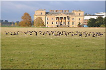 SO8844 : Canada geese and Croome Court by Philip Halling