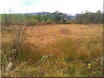H5575 : Streefe Glebe Townland by Kenneth  Allen