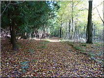 SU8113 : Woodland track in Wildhams Wood by Dave Spicer