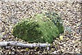 SU9256 : Moss-covered cylinder by Bill Nicholls