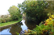 SO8480 : Staffs & Worcs Canal adjacent to Canalside Terrace, Cookley Playing Fields, Cookley by P L Chadwick
