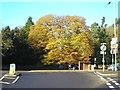SK5554 : The Pilgrim Oak by Antony Dixon