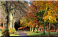 J2764 : Autumn trees, Lisburn by Albert Bridge