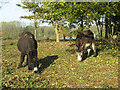TG2004 : A pair of donkeys foraging at Fir Hill, Keswick by Evelyn Simak