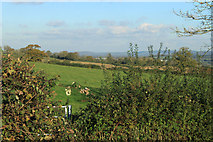 ST7037 : 2012 : West from the A359 by Maurice Pullin