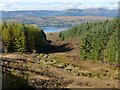 NS2785 : Woodland above Rhu Reservoirs by Lairich Rig