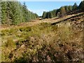 NS2785 : Course of a burn above Rhu Reservoirs by Lairich Rig