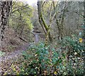 SJ9594 : Gower Hey Woods by Gerald England
