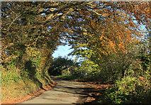 ST5863 : 2012 : Norton Lane in autumn by Maurice Pullin