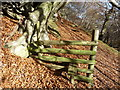 SO2904 : Stile in Beech woods by Jeremy Bolwell