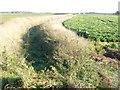 TF3832 : Dike between the crops on Lapwater lane by Richard Humphrey