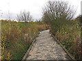 TQ5579 : Broadwalk through the marshes by Roger Jones