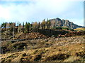 NG5053 : Forestry work below The Storr by Dave Fergusson