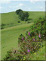 SN7580 : Willowherb, gorse, hill pasture and trees - Ceredigion by Roger  Kidd