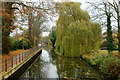 TL8683 : Little Ouse River, Thetford, Norfolk by Peter Trimming