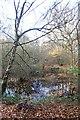 TQ7296 : Autumn Pond by John Myers