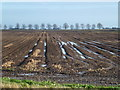 TL2289 : The potato harvest is over on Holme Fen by Richard Humphrey