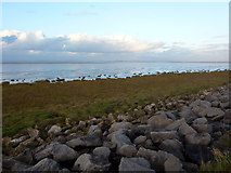 SD3648 : Salt marsh and sea wall north east of Knott End by John H Darch