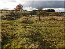 NS4660 : Remains of a field dyke by Lairich Rig