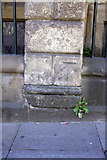 NZ2564 : Benchmark on #98 Pilgrim Street by Roger Templeman