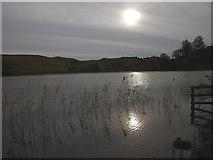 SD3583 : Reeds at Bigland Tarn by Karl and Ali