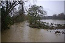 SP3365 : River Leam, Newbold Comyn by Stephen McKay