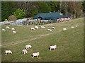 NT4830 : Sheep at Bridgelands by Walter Baxter