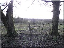 H5173 : Trees and fallen leaves, Killycurragh by Kenneth  Allen
