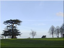 TQ1450 : Trees on the crest of the Downs, Denbies by Stefan Czapski