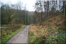 SE2968 : Bridleway into Chinese Wood by Bill Boaden