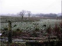 H4168 : Frosty at Crucknamona by Kenneth  Allen