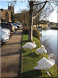 SO8454 : Swans overlook a flooded River Severn by Philip Halling