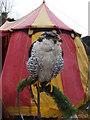 SH7956 : Peregrine Falcon by Richard Hoare
