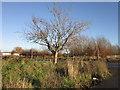 TA1330 : Wyton Grove at Rimswell Grove, Hull by Ian S