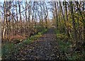 SK5601 : Path on the edge of  Aylestone Playing Fields by Mat Fascione