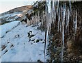 NY3994 : Icicles by a hill track by Walter Baxter