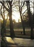 SX9164 : Trees on Lymington Road, Torquay by Derek Harper